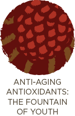 Anti-Aging Antioxidants: The Fountain of Youth